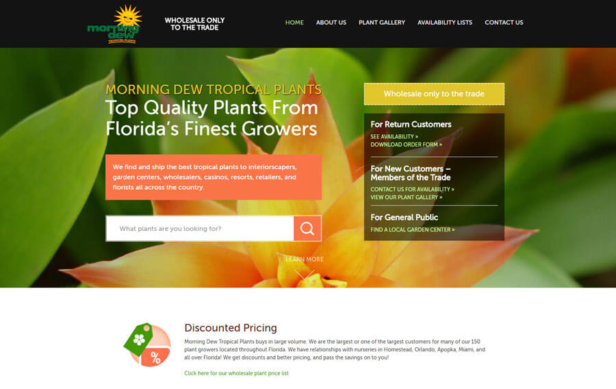 custom-wordpress-miami-morning-dew-1